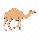 animal, camel, desert, africa, wildlife