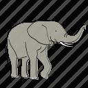 elephant, africa, animal, mammal, wildlife
