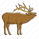 animal, canada, elk, mammal, wildlife icon