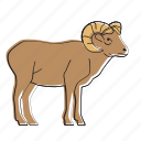 ram, animal, horned, mammal, wildlife
