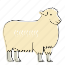 sheep, animal, farm, mammal, wool