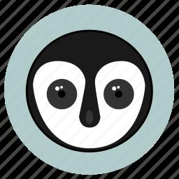 animals, big eyes, cute, face, huggable, penguino, pets icon