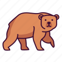 animals, bear, wildlife, zoo