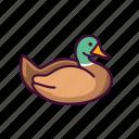 animals, duck, wildlife, zoo