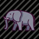 animals, elephant, wildlife, zoo