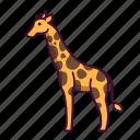animals, giraffe, wildlife, zoo
