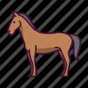 animals, farming, horse, wildlife, zoo