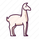 animals, llama, wildlife, zoo