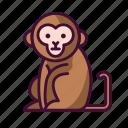 animals, monkey, wildlife, zoo