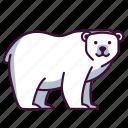 animals, bear, polar, wildlife, zoo