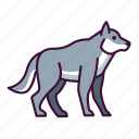 animals, wildlife, wolf, zoo