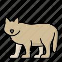 animal, animals, wild, wolf