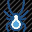 animal, animal kingdom, bug, cockroach, insect