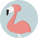 animal, beak, flamingo, tropical, wading bird, wildlife, zoo icon