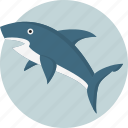 aggressive, elasmobranch, fins, fish, shark, swim, underwater icon