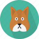 animal, cute, herbivore, rodent, small, squirrel, tree-dwelling icon