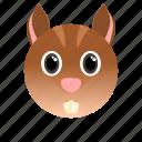 animal, squirrel, wild