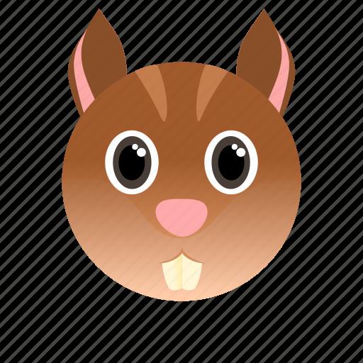 animal, squirrel, wild icon