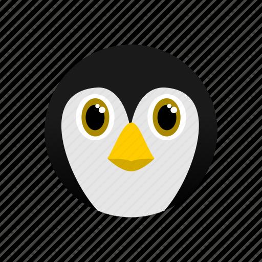 animal, arctic, artic, penguin, white icon