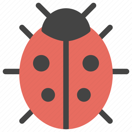 animals, bug, development, error, insect, ladybug icon