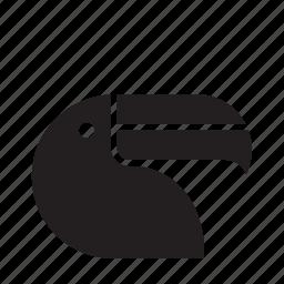 animal, bird, toucan, tropical icon
