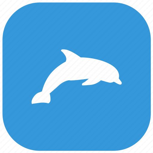 animal, dolphin, mammal, zoo icon