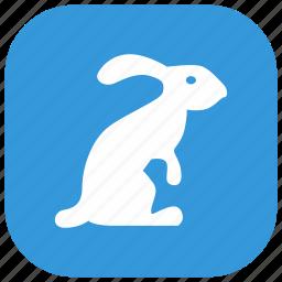 animal, nature, rabbit, zoo icon