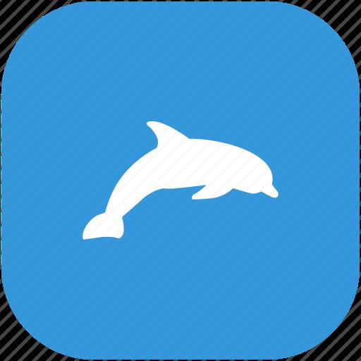 animal, aquarium, dolphin, zoo icon