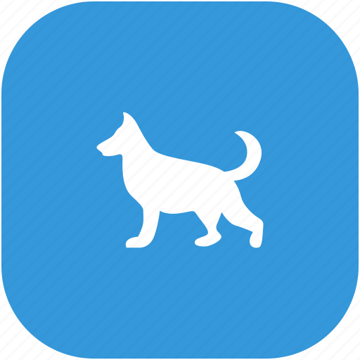 animal, collie, dog, pet icon