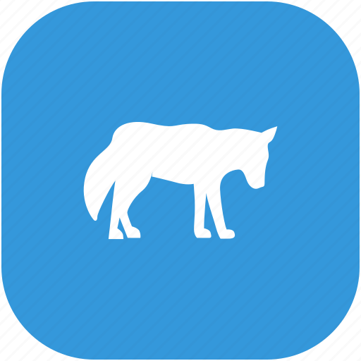 animal, lonely, wild, wolf icon