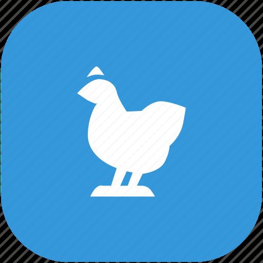 animal, bird, chicken, zoo icon