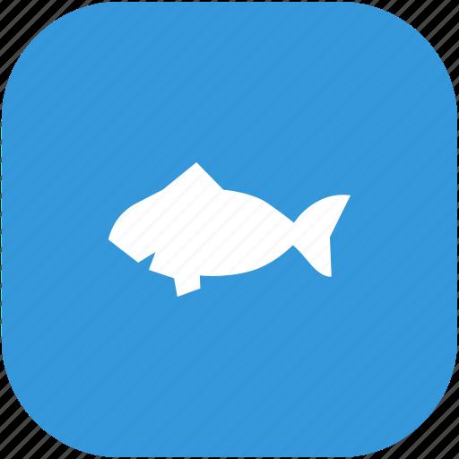 aquarium, fish, piranha, zoo icon