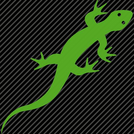 amphibian, gecko, lizard, reptile, reptilia, squamata icon