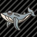 mammal, whale, ocean, large, blue