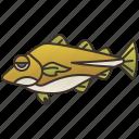 codfish, fauna, fishery, ocean, seafood icon