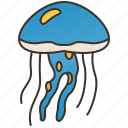 dangerous, invertebrate, jellyfish, marine, medusa icon