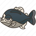 carnivore, fish, freshwater, piranha, teeth icon