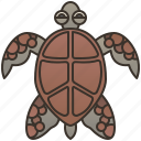 ocean, sea, shell, turtle, wildlife