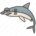 carcharodon, dangerous, ocean, predator, shark