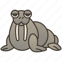arctic, flipper, mammal, ocean, walrus