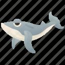 blue, large, mammal, ocean, whale icon