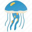 dangerous, invertebrate, jellyfish, marine, medusa