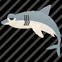 ocean, predator, dangerous, shark, carcharodon icon