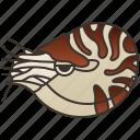 cephalopod, marine, mollusk, nautilus, wildlife icon