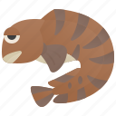 atlantic, fish, marine, seawolf, wolffish