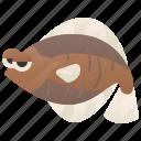 abyssal, fish, flatfish, flounder, ocean