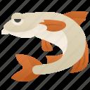 animal, aquatic, fish, fishing, mullet