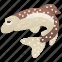 aquaculture, fish, food, fresh, trout