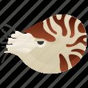 cephalopod, marine, mollusk, nautilus, wildlife