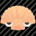 clam, scallop, sea, seafood, shell